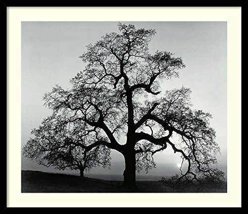Framed Art Print, 'Oak Tree, Sunset City, California, 1962' by Ansel Adams: Outer Size 27 x 23