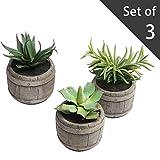 Assorted Mini Artificial Succulents Plants in Rustic Wood Barrel Design Pots, Set of 3, Brown