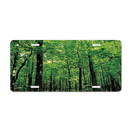 FloralFlames Nature,Woodland Tree Forest Jungle in Sunny Day Mother Earth Environment Picture,Fern Green Seal Brown Personalized Novelty Front License Plate Car Tag 4 Holes (12 X 6 in) ()