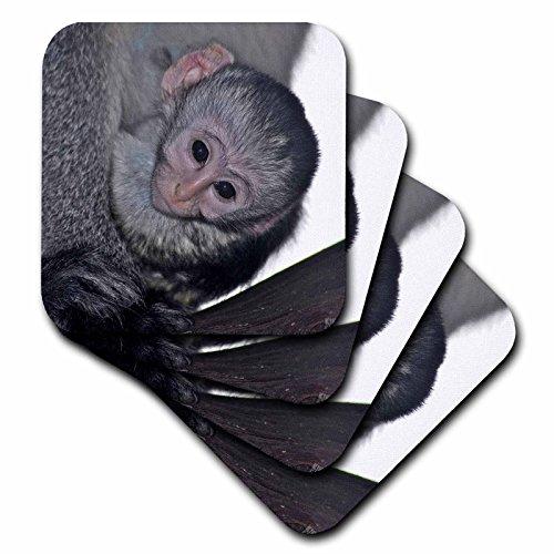 3dRose CST_9868_3 Black Faced Vervet Monkey Masai Mara National Park Kenya Africa-Ceramic Tile Coasters, Set of 4 ()