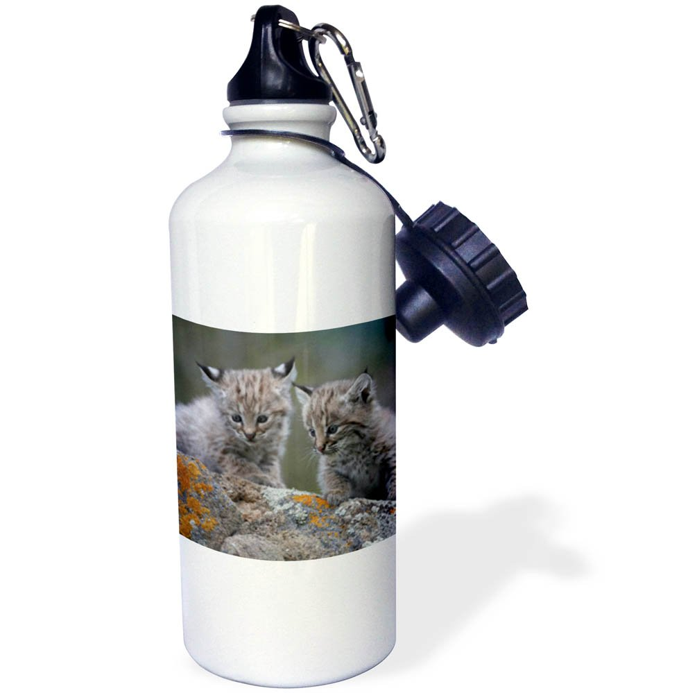 3dRose wb/_259673/_1 Mountain Lion USA Water Bottle Stalking Down the Hillside Montana Puma Concolor