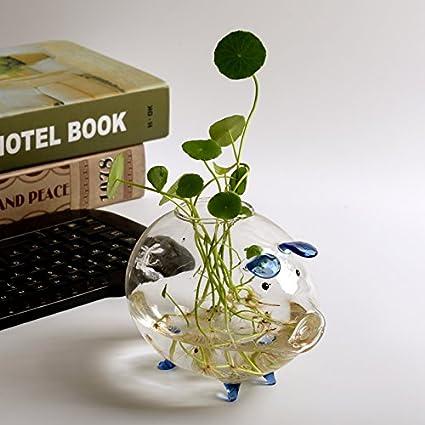 Amazon Com 1 Pc Plant Terrarium Glass Plant Pot Tabletop Standing