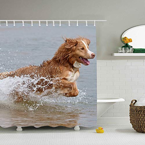 """71 × 71"""" Fabric Shower Curtain Set, Waterproof Bathroom Curtain Set, Animal Nova Scotia Duck Retriever Dogs Mildew Resistant Shower Curtains,Equipped with Hooks"""