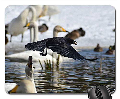 (Mouse Pad - Animal Lake Waterside Bird Crow Feathers Wings)