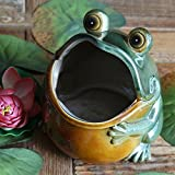 Better-Way Friendly Frog Pot Ceramic Succulent Plant Pot Cactus Planter Flower Pot Container Planter Animal Decorative Pots Indoor (6 inch Frog) For Sale