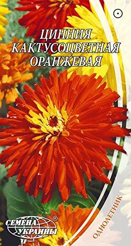 Annual Seeds Flowers Original from Ukraine 0.3 Gram Zinnia elegans Cactus Orange