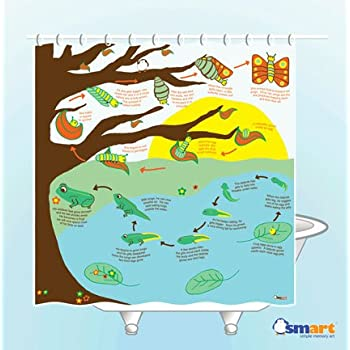 Metamorphosis Shower Curtain - EVA vinyl