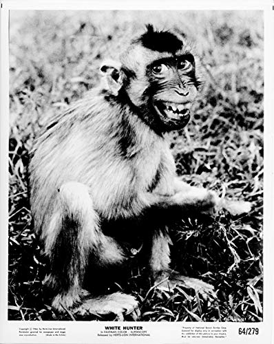 White Hunter original 1964 8x10 photo baby monkey