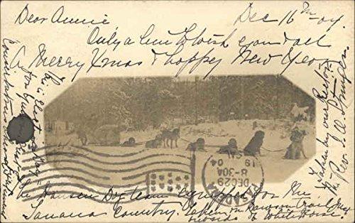Dog Sled Other Original Vintage Postcard from CardCow Vintage Postcards