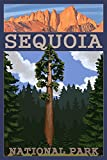 Sequoia National Park, California - Sequoia Tree and Palisades (12x18 Art Print, Wall Decor Travel Poster)