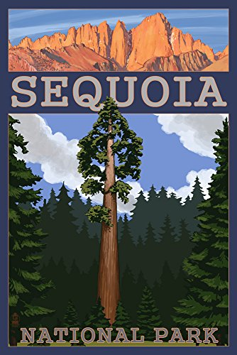 Sequoia National Park, California - Sequoia Tree and Palisades (16x24 Giclee Gallery Print, Wall Decor Travel Poster)