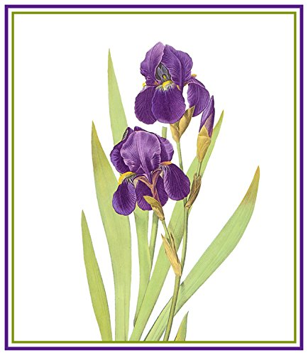 Used, Orenco Originals Bearded Iris Flower by Pierre-Joseph for sale  Delivered anywhere in USA