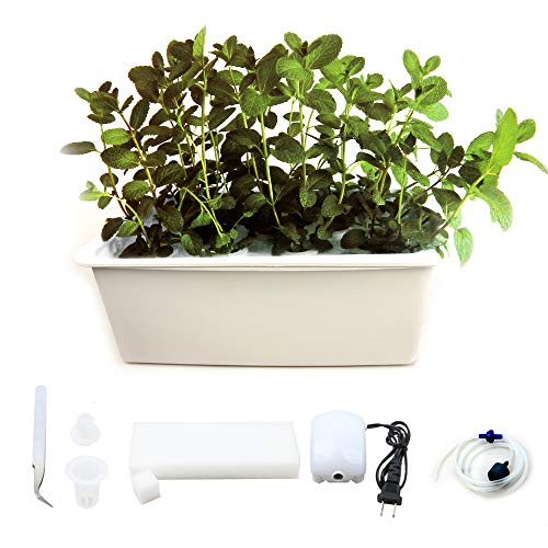 WePlant Home Garden Hydroponics Planting Box with 24 Pods,Aquarium Air Pump and Buoy, Outdoor DIY Soilless Plant Vegetable Like Coriander, Spinach, Chive, Sprout by Weplant