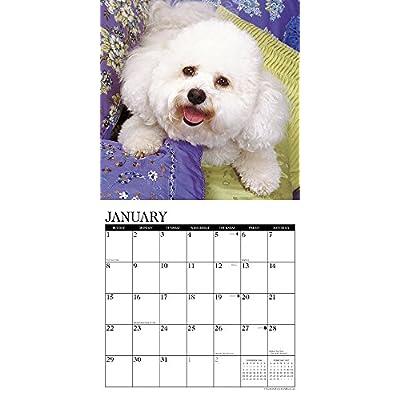 Just-Bichons-Frises-2017-Wall-Calendar-Dog-Breed-Calendars-Calendar–Wall-Calendar-August-5-2016