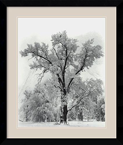 (Oak Tree, Snowstorm, Yosemite National Park-1948 by Ansel Adams Framed)