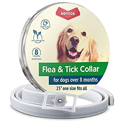 Flea collar | Flea and tick prevention for dogs | Flea collar for dogs | Dog flea and Tick Collar for Dogs | Dog Flea Collars for Small Big Dogs Flea Treatment | Flea Protection Pet Flea Tick Control by Sentas