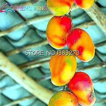 Elitely 1 unidades/bolsa de semillas de mango gigantes y semillas de mango mini semillas de mango orgánico maceta de frutas para casa jardín y semen: amarillo