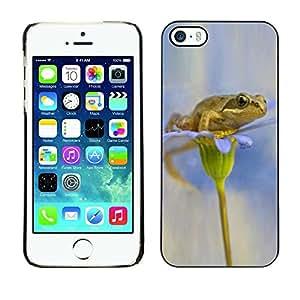 FECELL CITY // Duro Aluminio Pegatina PC Caso decorativo Funda Carcasa de Protección para Apple Iphone 5 / 5S // Flower White Snow Anemone