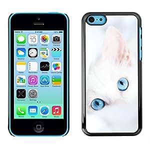 iBinBang / Funda Carcasa Cover Skin Case - Lindo gatito blanco invierno Clean Baby Blue - Apple iPhone 5C