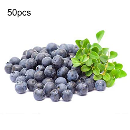 Remarkable Kay 50Pcs Artificial Blueberry Craft Fake Fruit Blueberries Home Kitchen Cabinet Decoration50Pcs Artificial Blueberry Craft Fake Fruit Home Kitchen Best Image Libraries Sapebelowcountryjoecom