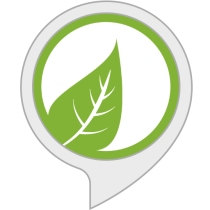 Ambient Noise: Rainforest Sounds