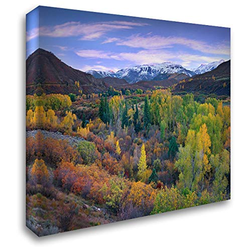 Quaking Aspen Forest in Autumn, Snowmass Mountain Near Quaking Aspen, Colorado 34x28 Gallery Wrapped Stretched Canvas Art by Fitzharris, Tim