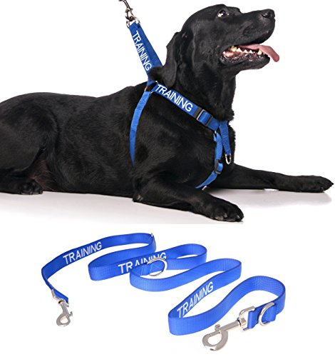TRAINING Blue Color Coded Front Back Ring L-XL Non-Pull Dog Harness and 2 4 6 Foot Professional Leash Sets (Do Not Disturb) PREVENTS Accidents By Warning Others Of Your Dog In Advance (Harness + 82