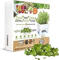 SeedBox SBMCUOR-Huerto Urbano Cultívame Mini-orégano, 17x4x17 cm ...