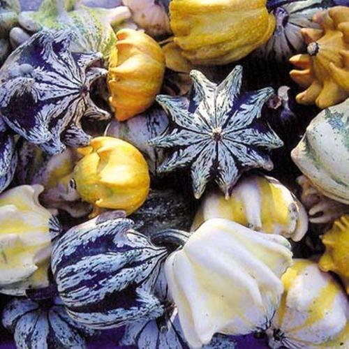 (Ten Commandments Gourd Seed - Crown of Thorns Gourds Garden Seeds (1gr))