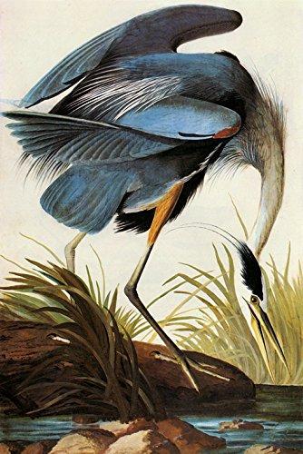 Audubon Great Blue Heron American Bird Fine Art Vintage Poster Repro 16