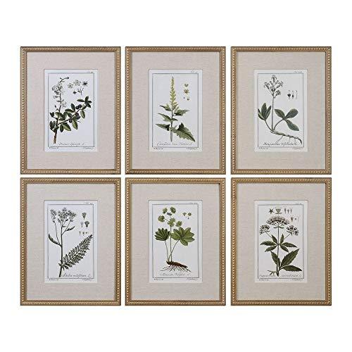 Uttermost Green Floral Botanical Study 6-Piece 22 3/4