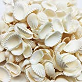 PEPPERLONELY Tiny White Cardium Ribbed Cockle Shells, 8 OZ Apprx. 300+ PC Shells, 1/2 Inch ~ 3/4 Inch