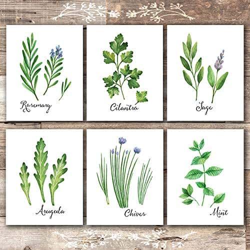 Amazon.com: Kitchen Herbs Art Prints (Set Of 6)