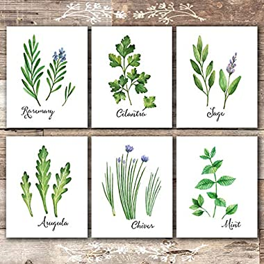 Kitchen Herbs Art Prints (Set of 6) - Unframed - 8x10s | Botanical Prints Wall Art