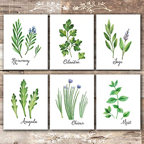 Kitchen Herbs Art Prints (Set of 6) - Unframed - 8x10s | Botanical Prints Wall Art (Rosemary Walls Art)