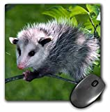 3dRose LLC 8 x 8 x 0.25 Inches Mouse Pad, Opossum (mp_1009_1)