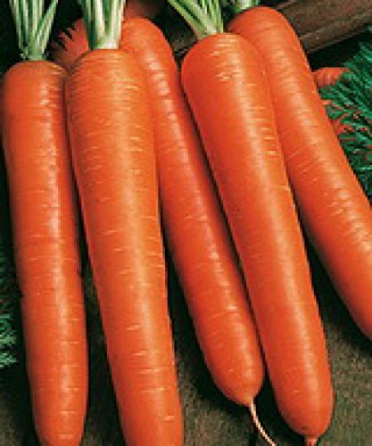 red carrots - 9
