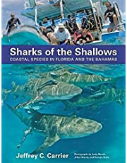 Sharks of the Shallows: Coastal Species in Florida and the Bahamas