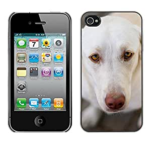 VORTEX ACCESSORY Hard Protective Case Skin Cover - white brown nose Labrador retriever - Apple iPhone 4 4S