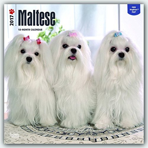 2017 Monthly Wall Calendar - Maltese