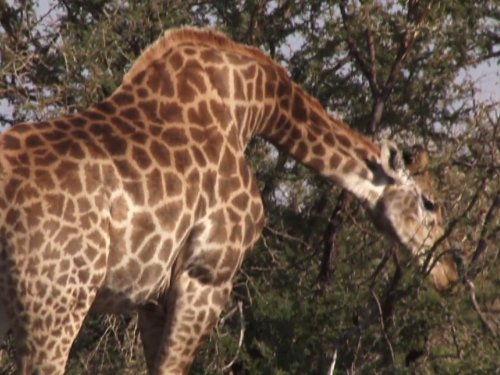 travel-with-kids-south-africa-safari-family-adventure