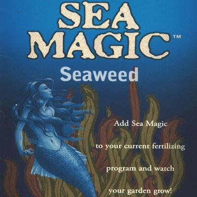 Sea Magic Seaweed Fertilizer, 8 Ounces Concentrate, Makes 528 Gallons