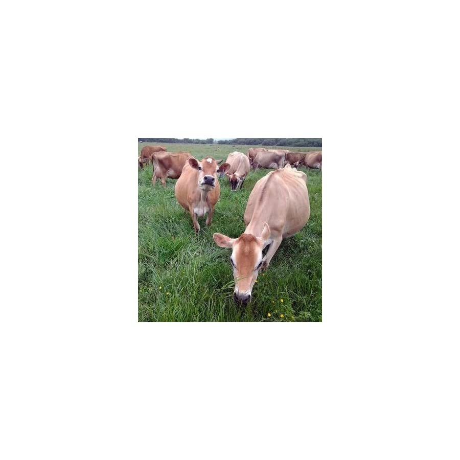 Raw Grass Fed Whey Happy Healthy Cows, COLD PROCESSED Undenatured 100% Grass Fed Whey Protein Powder, GMO Free