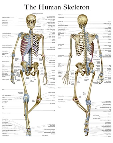 Skeleton e-chart: Quick reference guide -