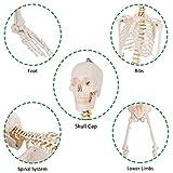 "Giantex Life Size 70.8"" Human Anatomical Anatomy"