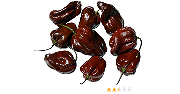 Habanero Chocolate Pepper 35 Seeds Seeds Very Spicy