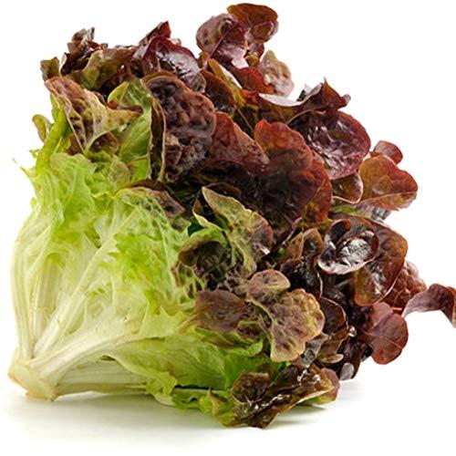 (Ruby Red Leaf Lettuce Seeds for Heirloom Microgreens or Garden bin191 (250 Seeds))