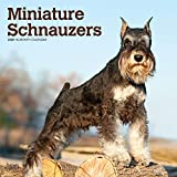 Miniature Schnauzers 2020 12 x 12 Inch Monthly Square Wall Calendar, Animals Small Dog Breeds (English, Spanish and French Edition) by