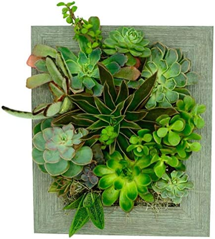 Portrait Gardens Wall Planter 8×10 – Instant Vertical Succulents Herbs Indoor Garden DIY Picture Cactus Plastic Ready to Hang Pin Plant Display Water