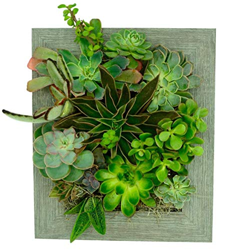 Portrait Gardens Wall Planter (8x10) - Instant Vertical Succulents Herbs Indoor Garden DIY Picture Cactus Plastic Ready to Hang Pin Plant Display Water - Portrait Standing